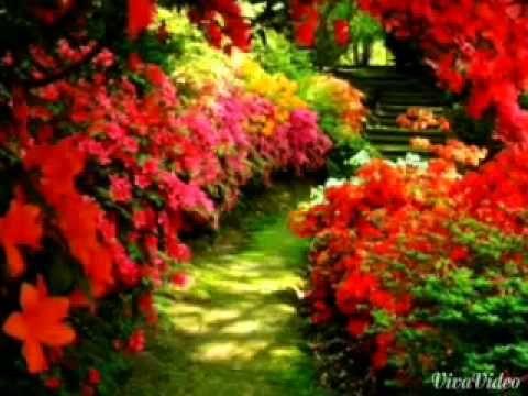فيديو مناظر طبيعية روعة للواتس Beautiful Gardens Dream Garden Beautiful Flowers Garden
