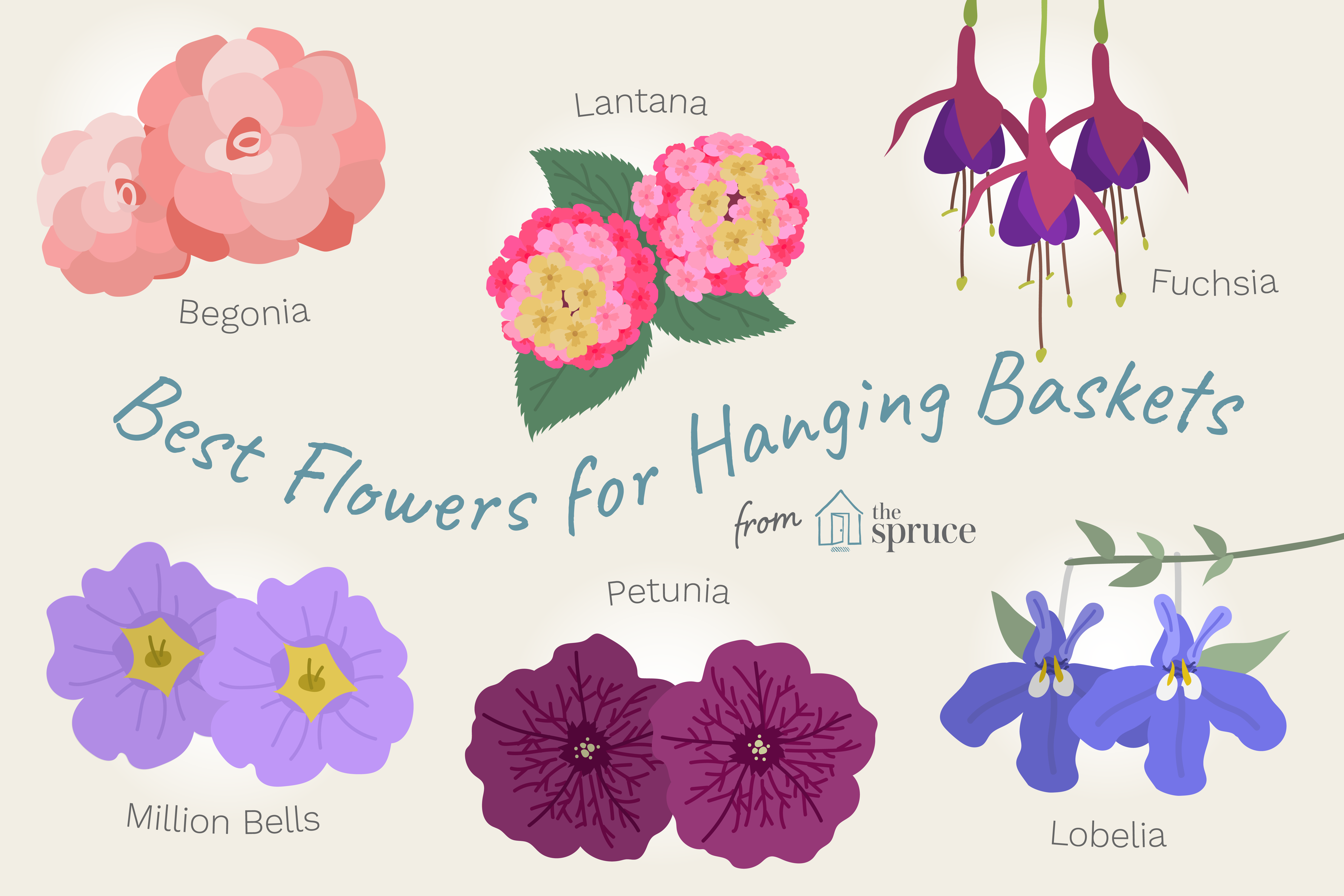 Choosing Flowers for Hanging Baskets is part of Hanging flower baskets, Hanging plants outdoor, Hanging baskets, Hanging plants, Hanging plants diy, Plants for hanging baskets - Fill your hanging flower baskets with the right plants and watch butterflies and hummingbirds flock to your garden or patio  These are the best to use