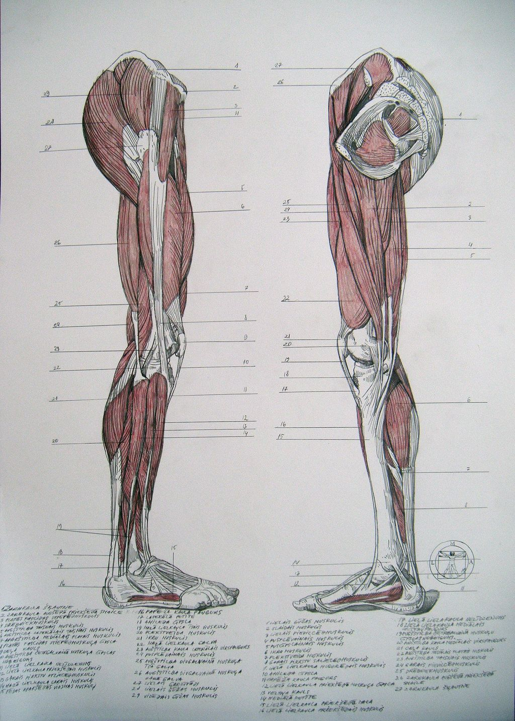 Muscles of legs. Sides by Reinis Gailitis | Works of Reinis Gailītis ...