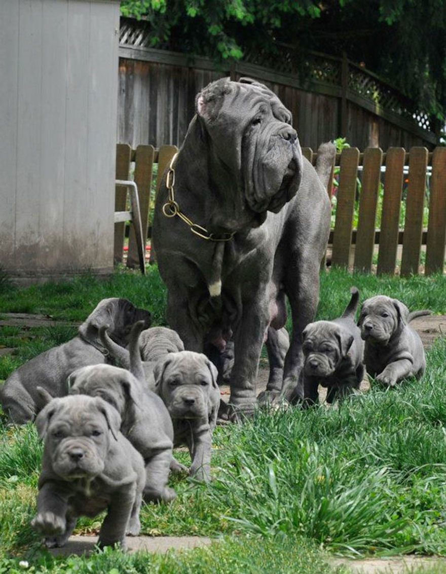 21 Proud Dog Moms Showing Of Their New Puppies Cute Animals