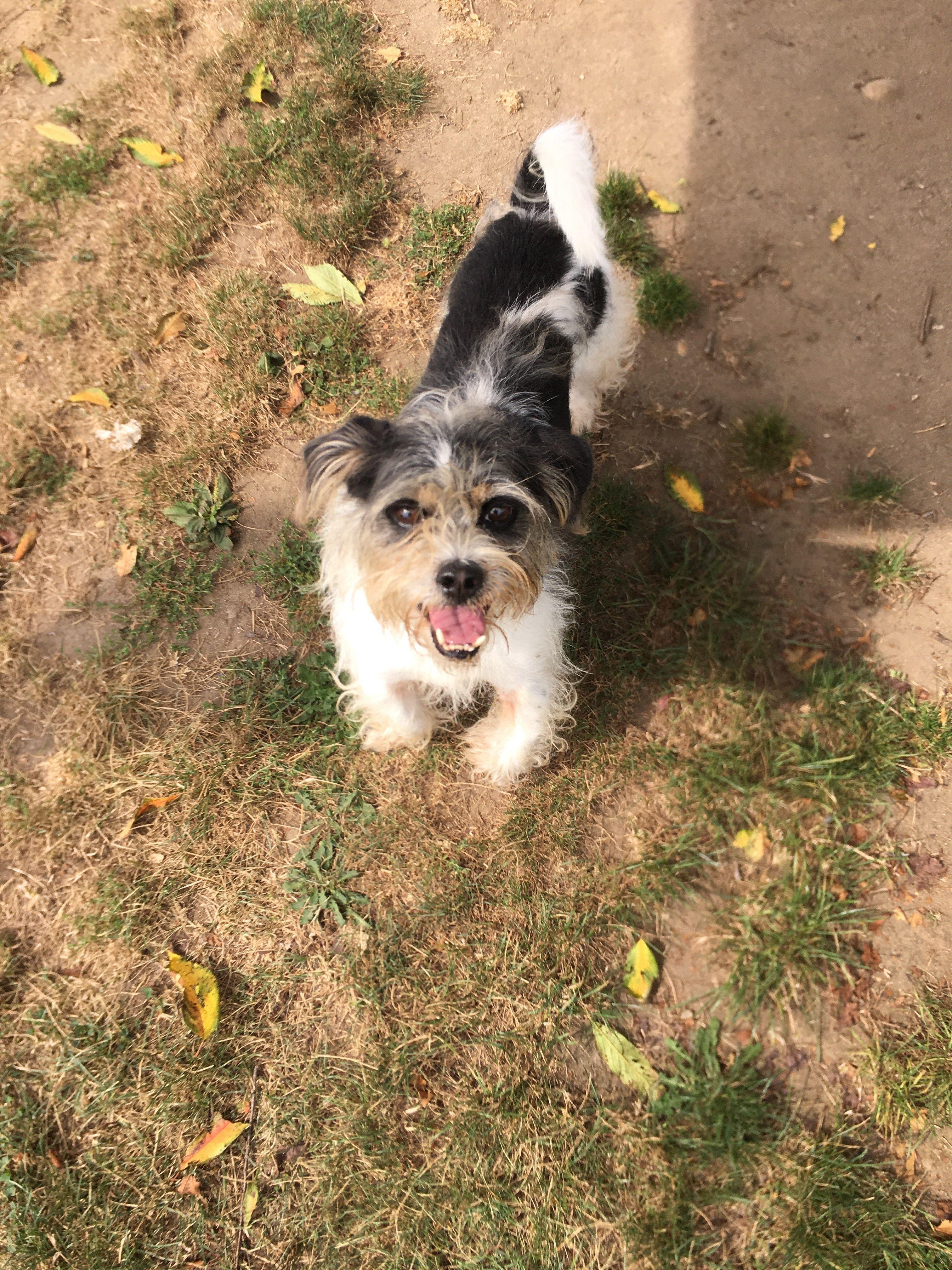 Adopt Quasimodo on Petfinder in 2020 Animal shelter