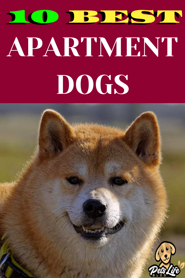 In This Post You Ll Discover 10 Best Apartment Dogs Apartment Dog Ideas Apartment Dogs Breeds Best Apartment