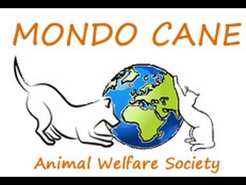 Mondo Cane Animal Welfare Society Shelter on Patmos Island