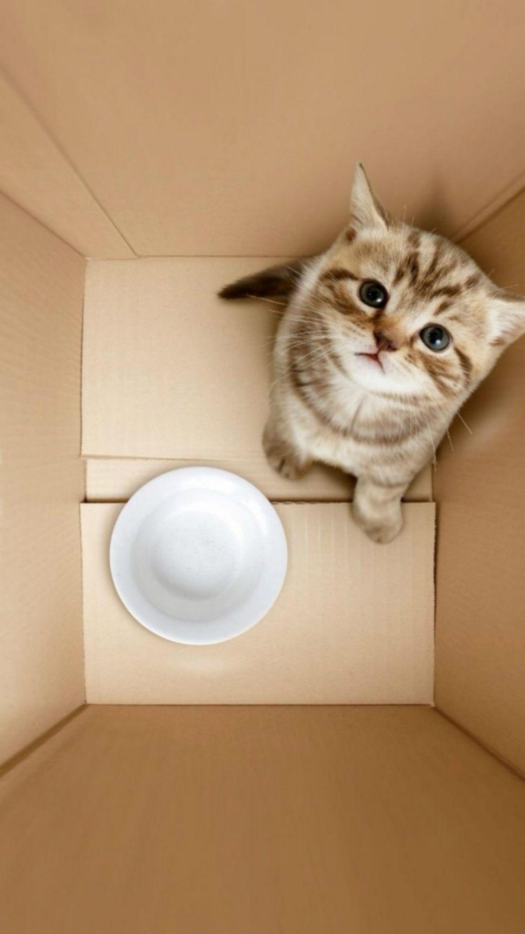 Dimensional 3d Poor Kitten In Box Iphone 6 Wallpaper Iphone Wallpaper Cat Cats Iphone Animals
