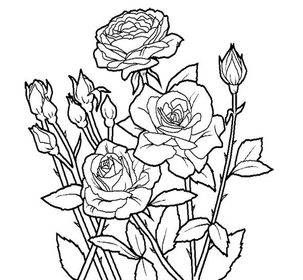 rose flower unique coloring page for kids - Unique Coloring Pages