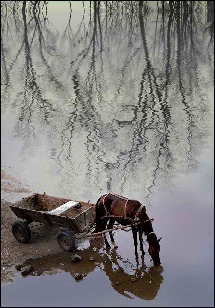 http://BlueChipMoney.com - #Reflections