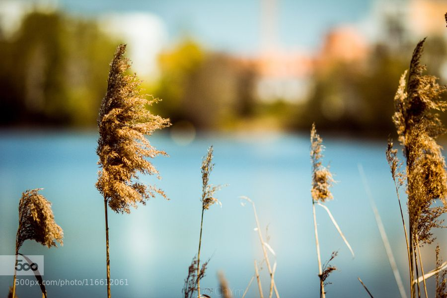 Peacefully by jeechym #nature