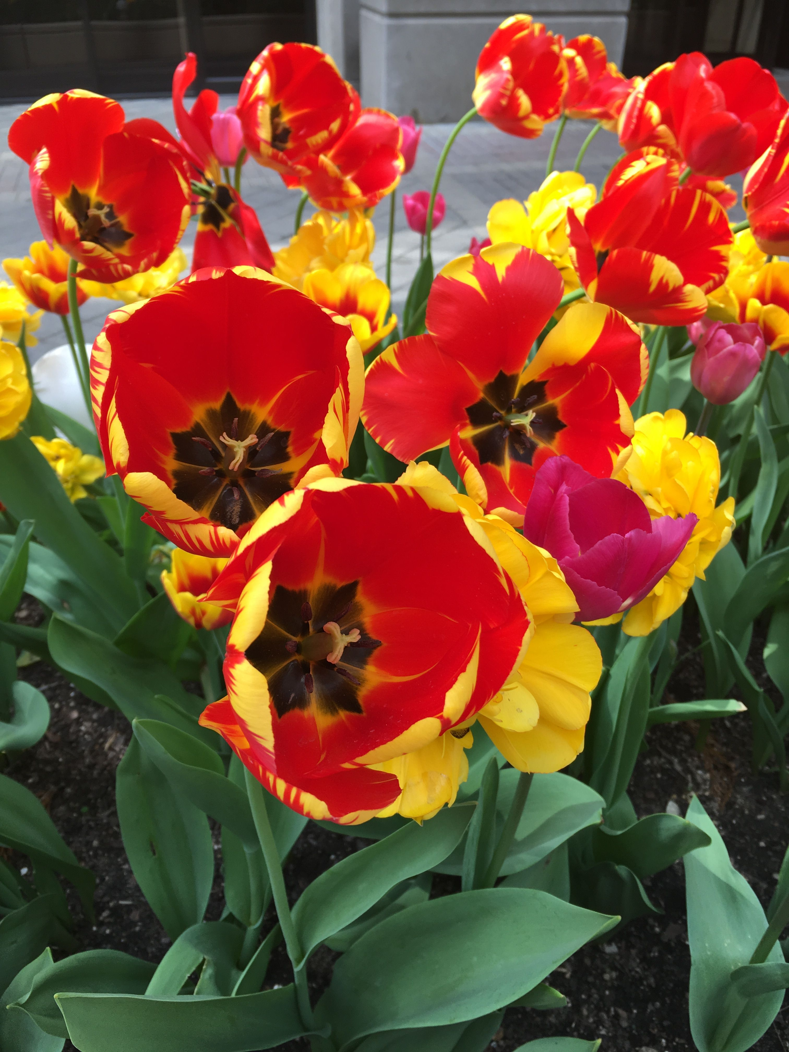 Love How Bright Spring Y These Flowers Are The Red Yellow Just