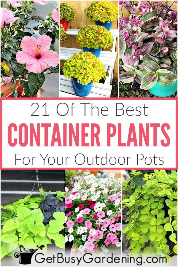 21 Best Container Plants For Pots - Get Busy Gardening