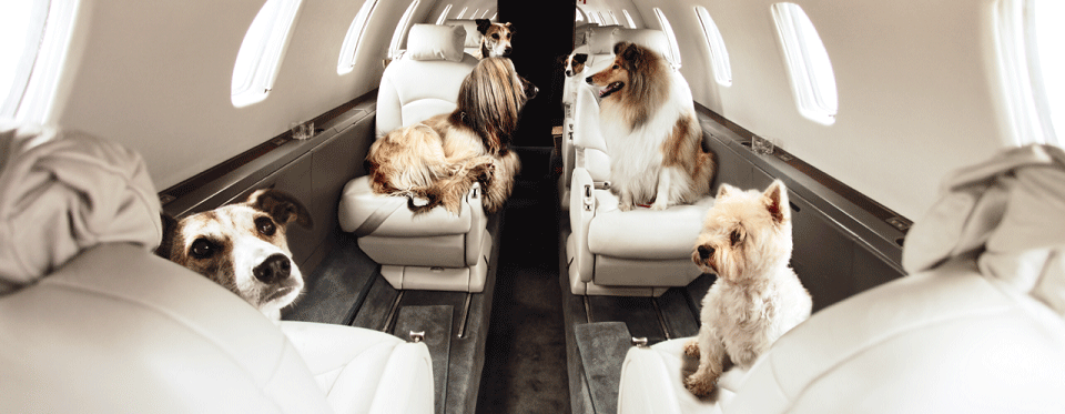 Victor On Demand Private Jet Charter Usa Pet Travel Private Jet Flying With Pets