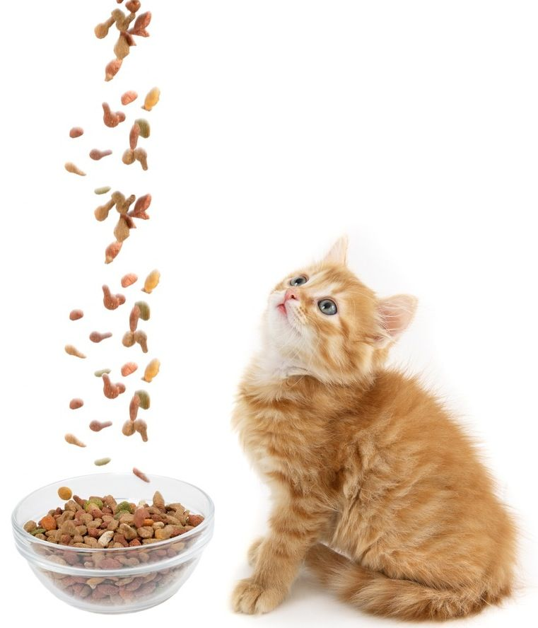 Will Dry Or Wet Food Be Better For Our New Kitten Cats Catsincare Com Kittens Cats Cat Pics