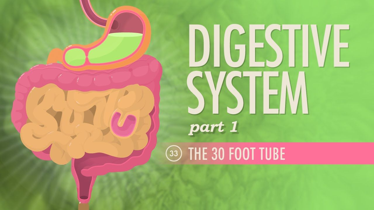 Digestive System, Part 1: Crash Course A&P #33 | teas v | Pinterest ...
