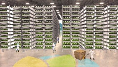 World's Biggest Indoor Vertical Farm Near NYC to Use 95% ...