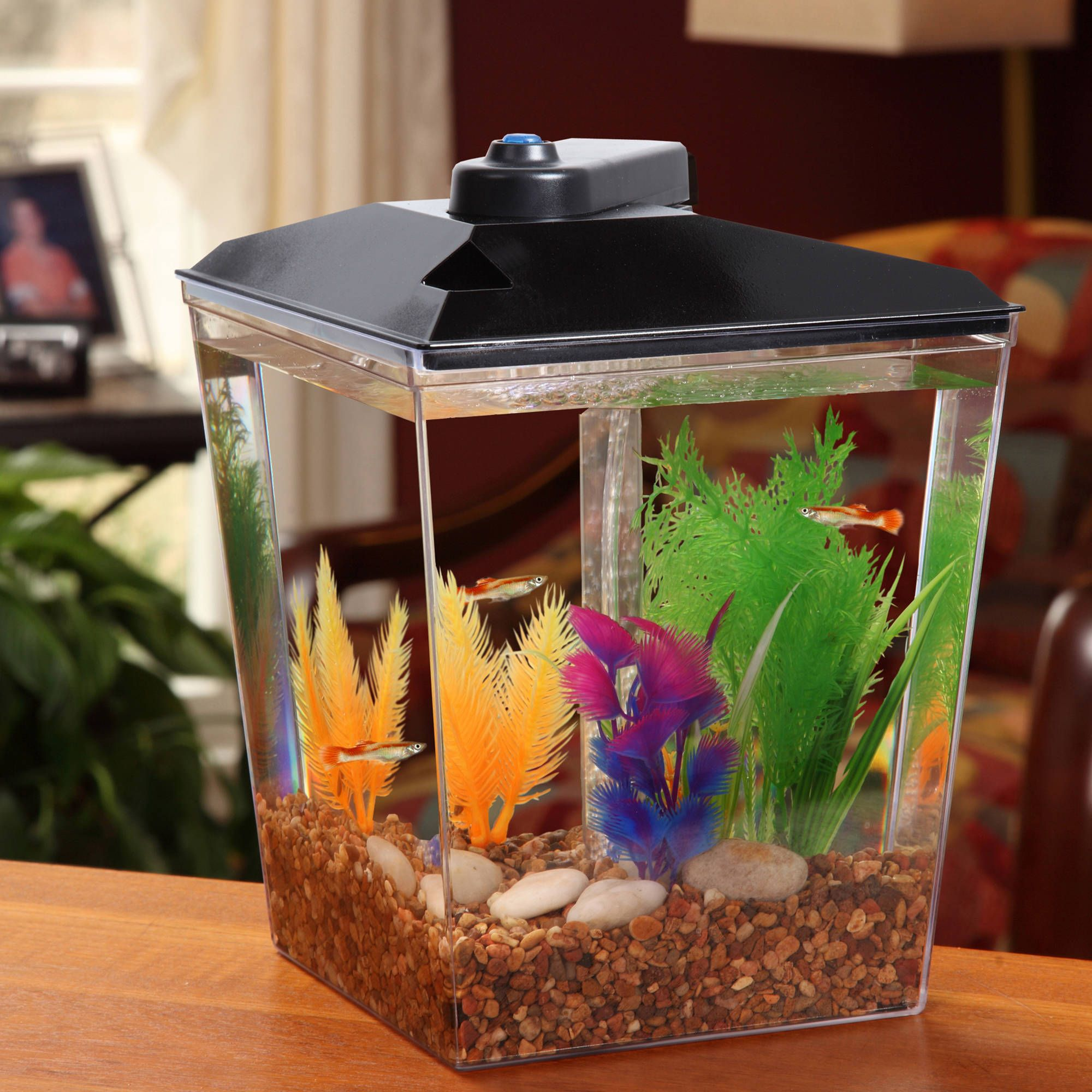 How To Set Up Your Hermit Crab Habitat Exoticpets