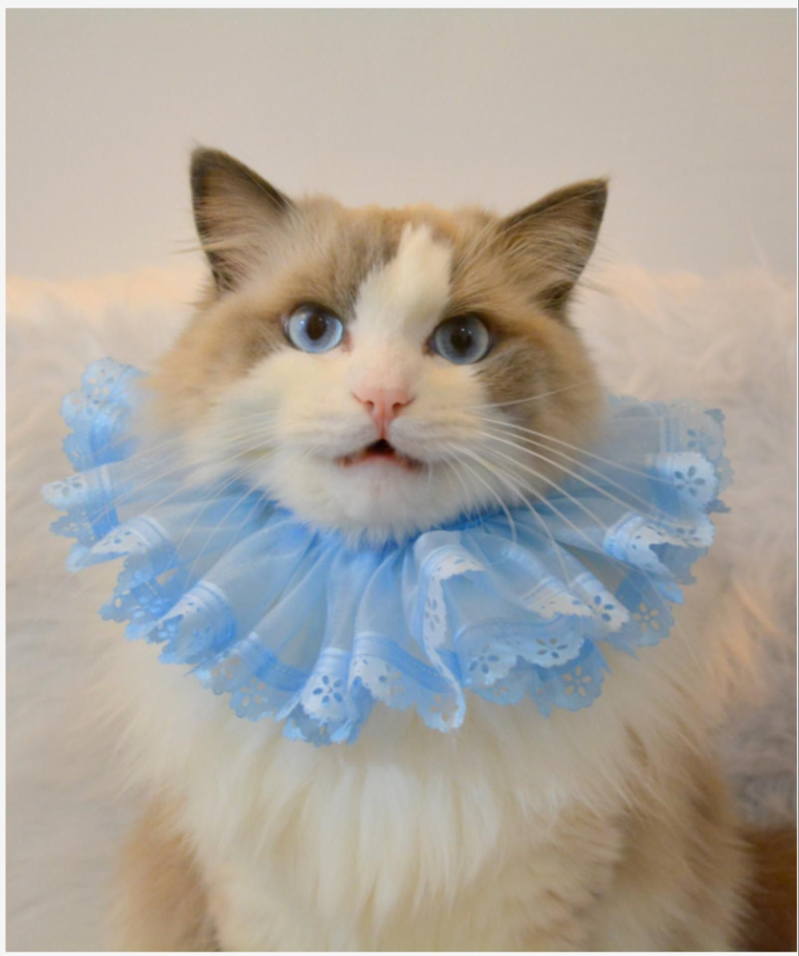 This Is A Neck Tutu For Small Pets 3 Http Ift Tt 2rsrarz Pet Photography Props Pet Photo Prop Cat Costumes