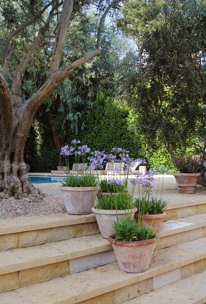 Terracotta Pots Of Agapanthus Mediterranean Garden Design Mediterranean Garden Backyard Makeover