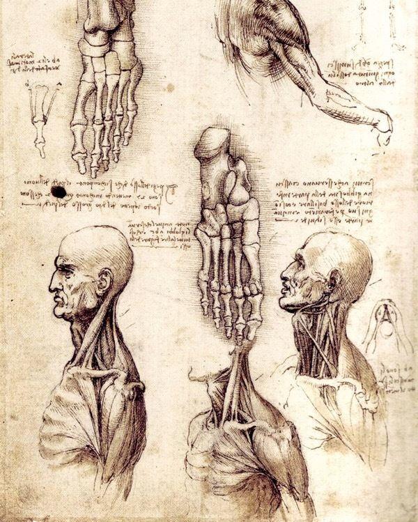 Leonardo Da Vinci Human Anatomy Foot Head Neck Sketch Real Canvas