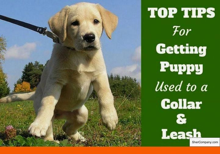 What S The Best Way To Potty Train A Dog And Tips On Potty