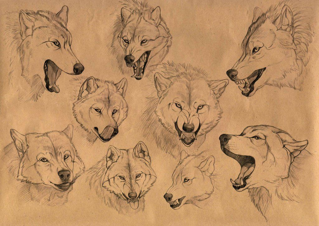 The wolf emotions by Anisis.deviantart.com on @deviantART