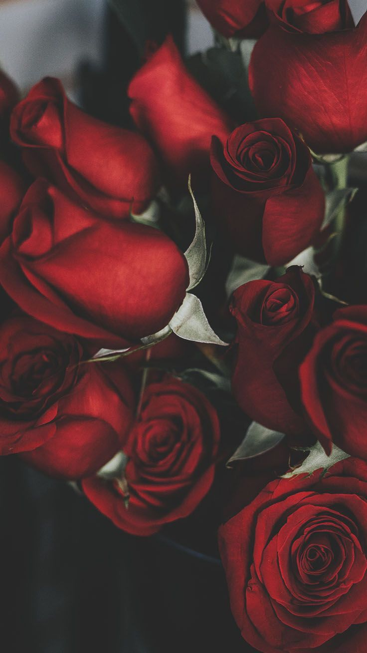 Floral Roses Wallpapers Iphone Android Fond D Ecran Telephone Fond D Ecran Rouge Fond Ecran