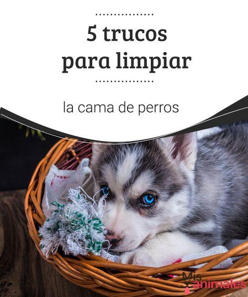 5 Trucos Para Limpiar La Cama De Perros Mis Animales Comederos Para Perros Camas Para Perros Perros