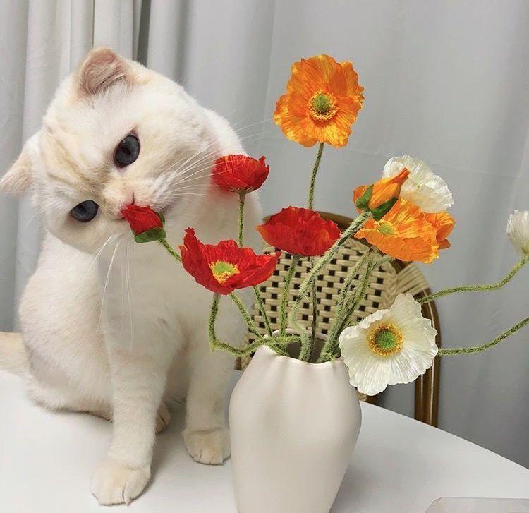 𝚑𝚞𝚗𝚗𝚒𝚎𝚋𝚞𝚖 ˎˊ Cute Cats Beautiful Cats Cute Creatures