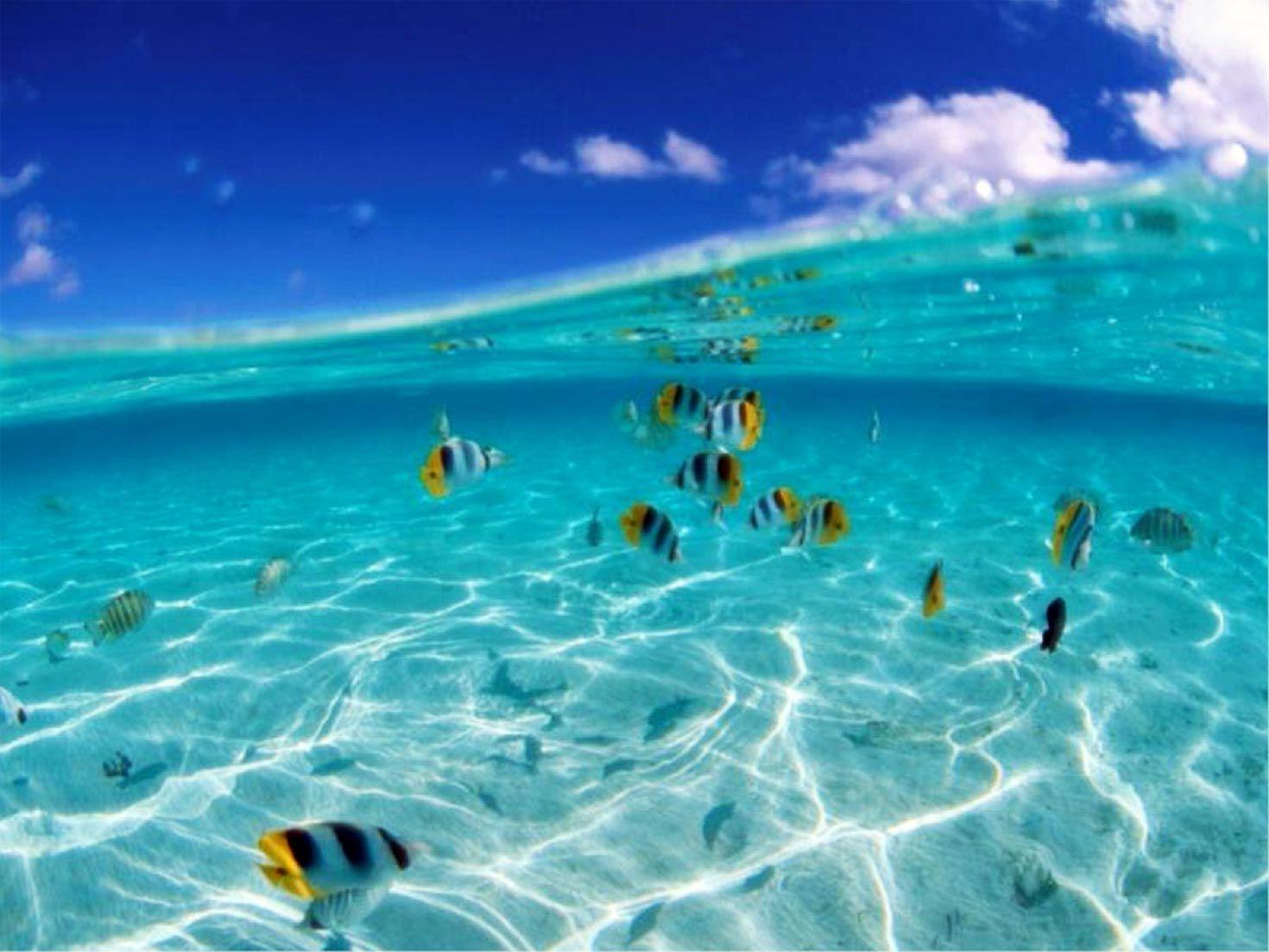 imagenes del mar buscar con google tejidos de gancho