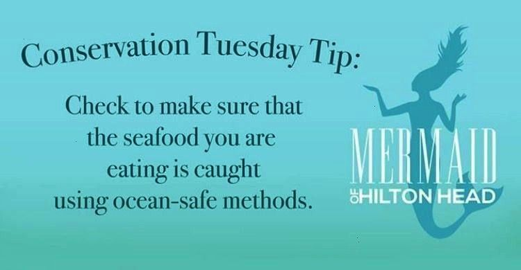 Tip It doesnt take much to reduce your carbon footprint a  Mermaid of Hilton Head  Conservation Tuesday Tip It doesnt take much to reduce your carbon footprint a Conserva...