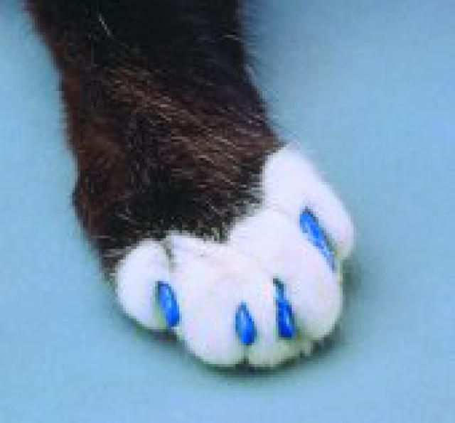 Don\'t Declaw Your Cat! Learn the Humane Alternatives | Cat and Cat ...