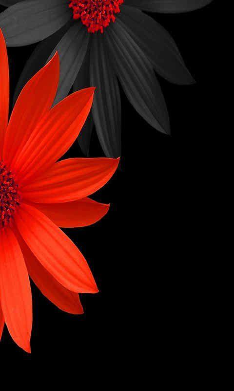 Pin On Black White Red