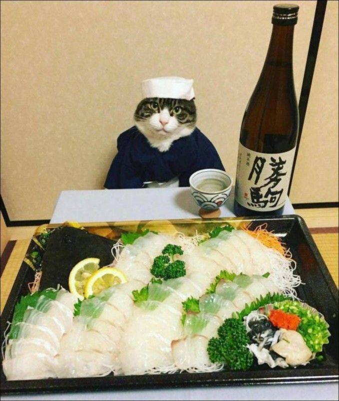 Кот повар. Фото прикол (с изображениями) | Смешные кошки ...