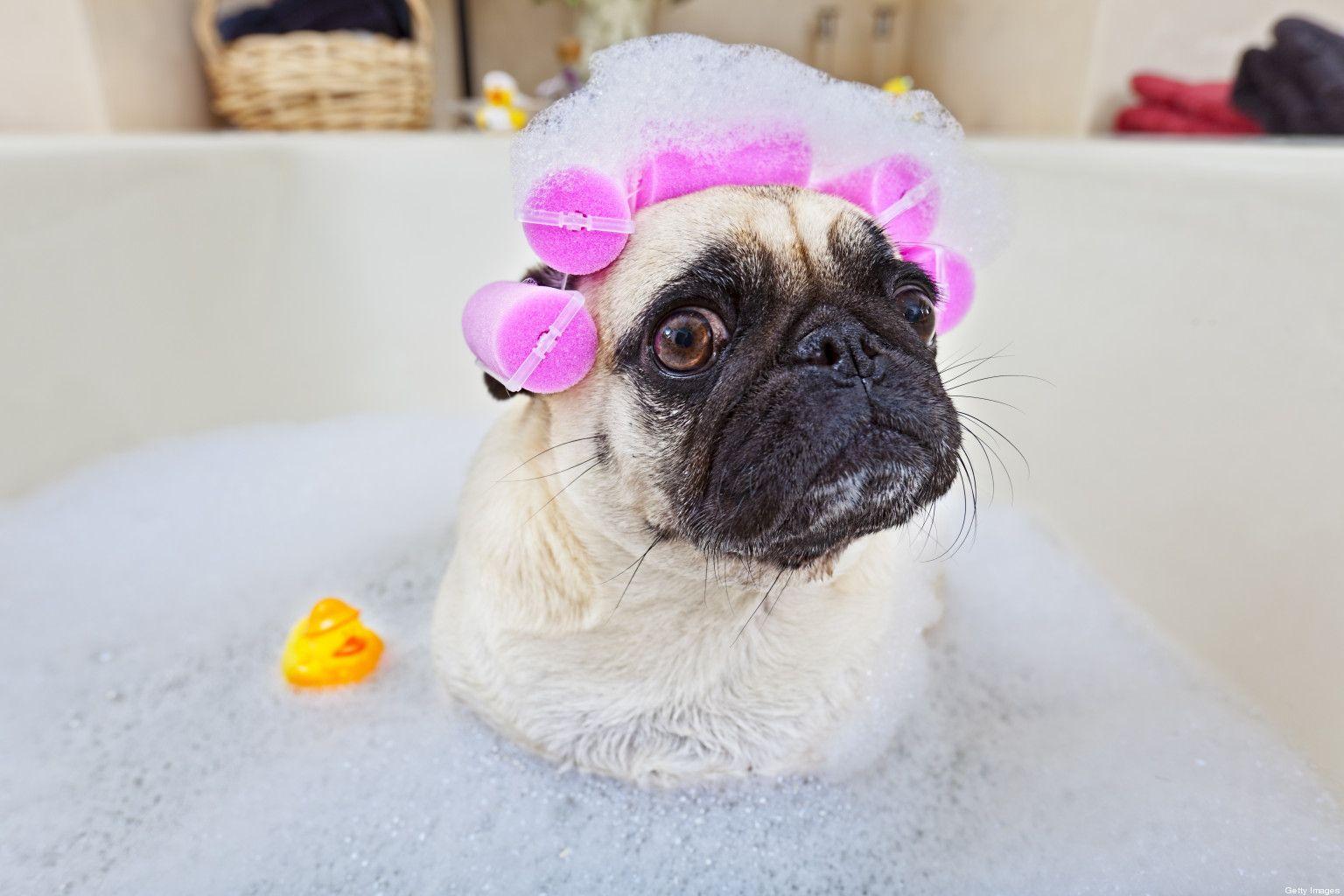 Te Preocupa La Piel De Tu Mascota Prueba Revital Shampoo Vet Line De Nogga El Champu Nogga Revital Esta Formulado A Base De Ing Perros Banar Perro Mascotas