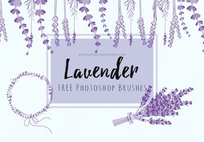 lavender flowers brushes | Graphic Design Inspiration | Photoshop