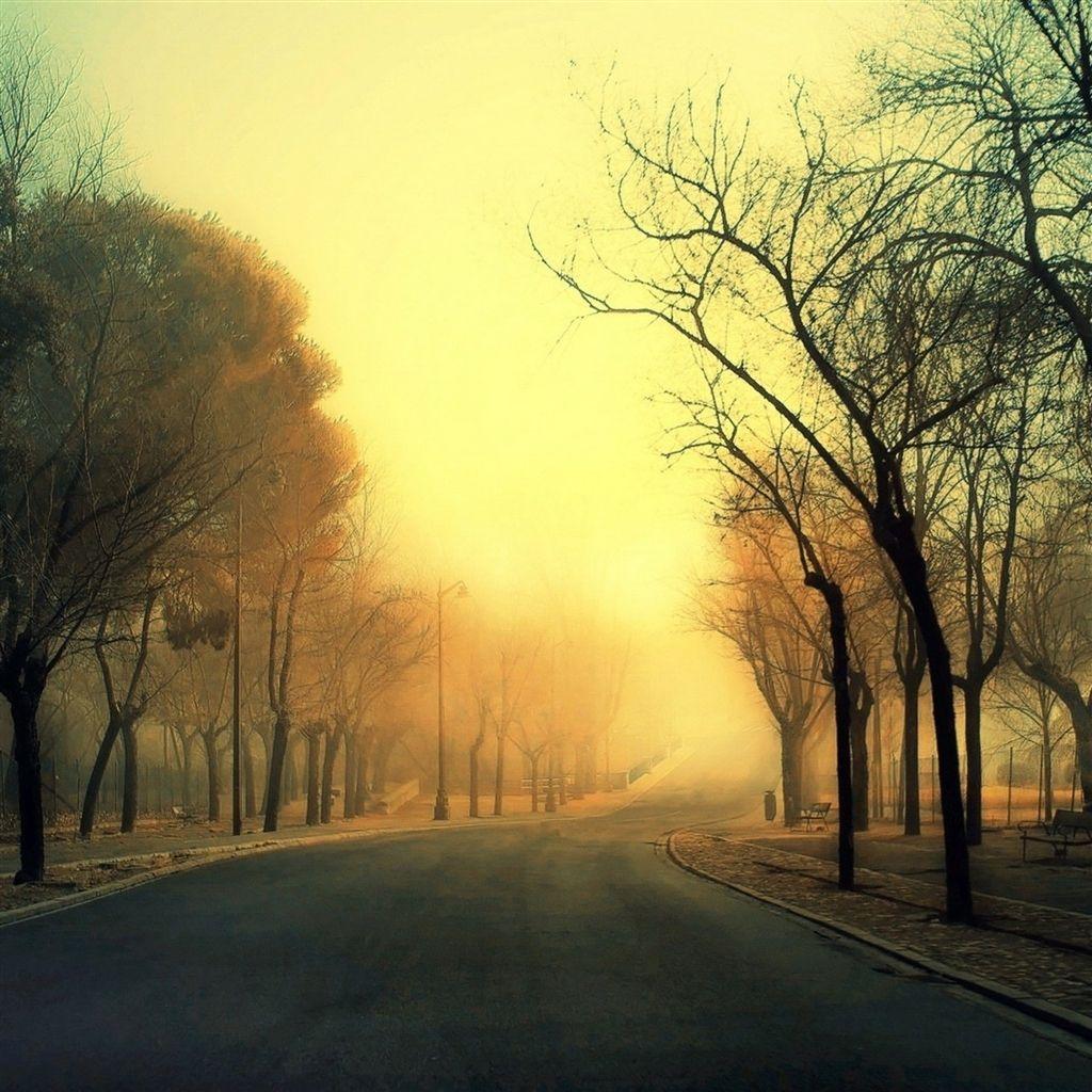 Trees Roads #iPad #Air #Wallpaper