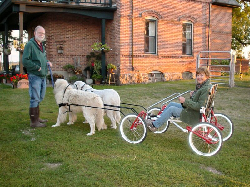dog cart - Google Search | Toby | Dogs, Biking with dog, Working dogs