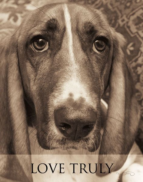 Love Truly By Jim Dratfield Adorable Basset Hound Art Print 11x14 Basset Hound Art Animal Photography Dog Photography
