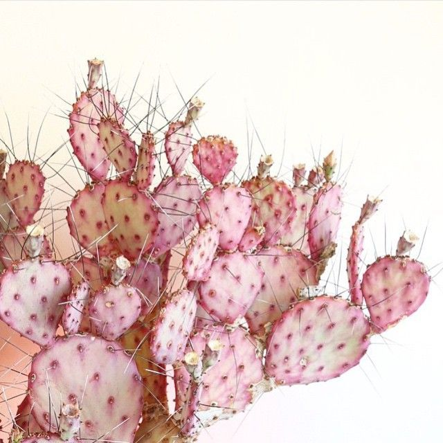 Pin by jiawun zeng on pink pinterest cacti crushes and plants flower mightylinksfo Images