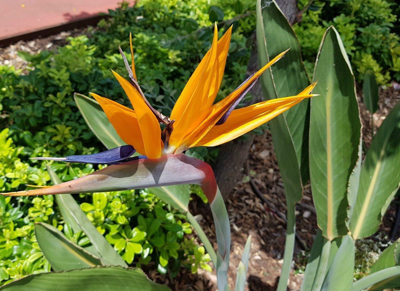 Funchal Municipal Garden Madeira Review Municipal Gardens Birds Of Paradise Flower Traditional Garden