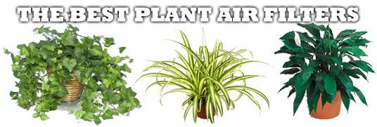 Link to nasa 39 s list of air filtering plants home pinterest for Nasa indoor plant list
