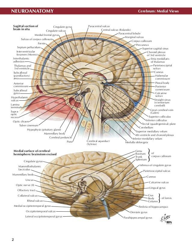 Pin by Amanda Otto on Neurology | Pinterest