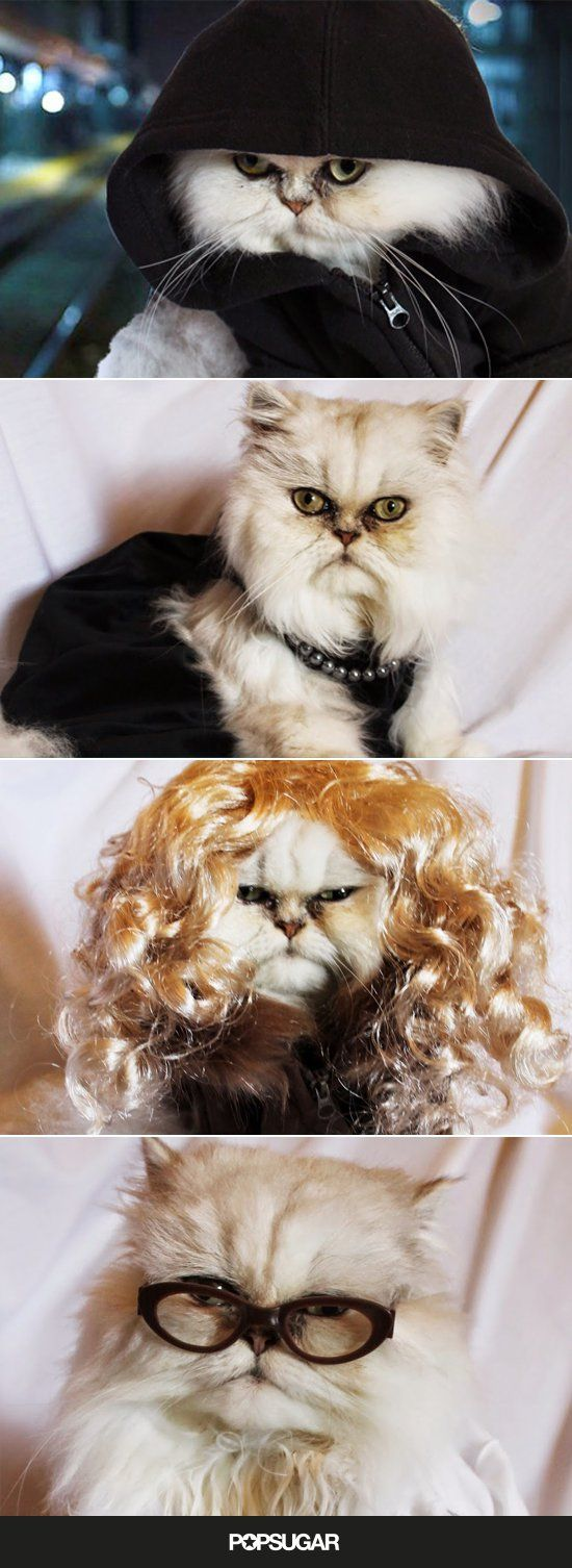 Pin for Later: This Cat Dressed as the Orphan Black Clones Wins Halloween For All Time