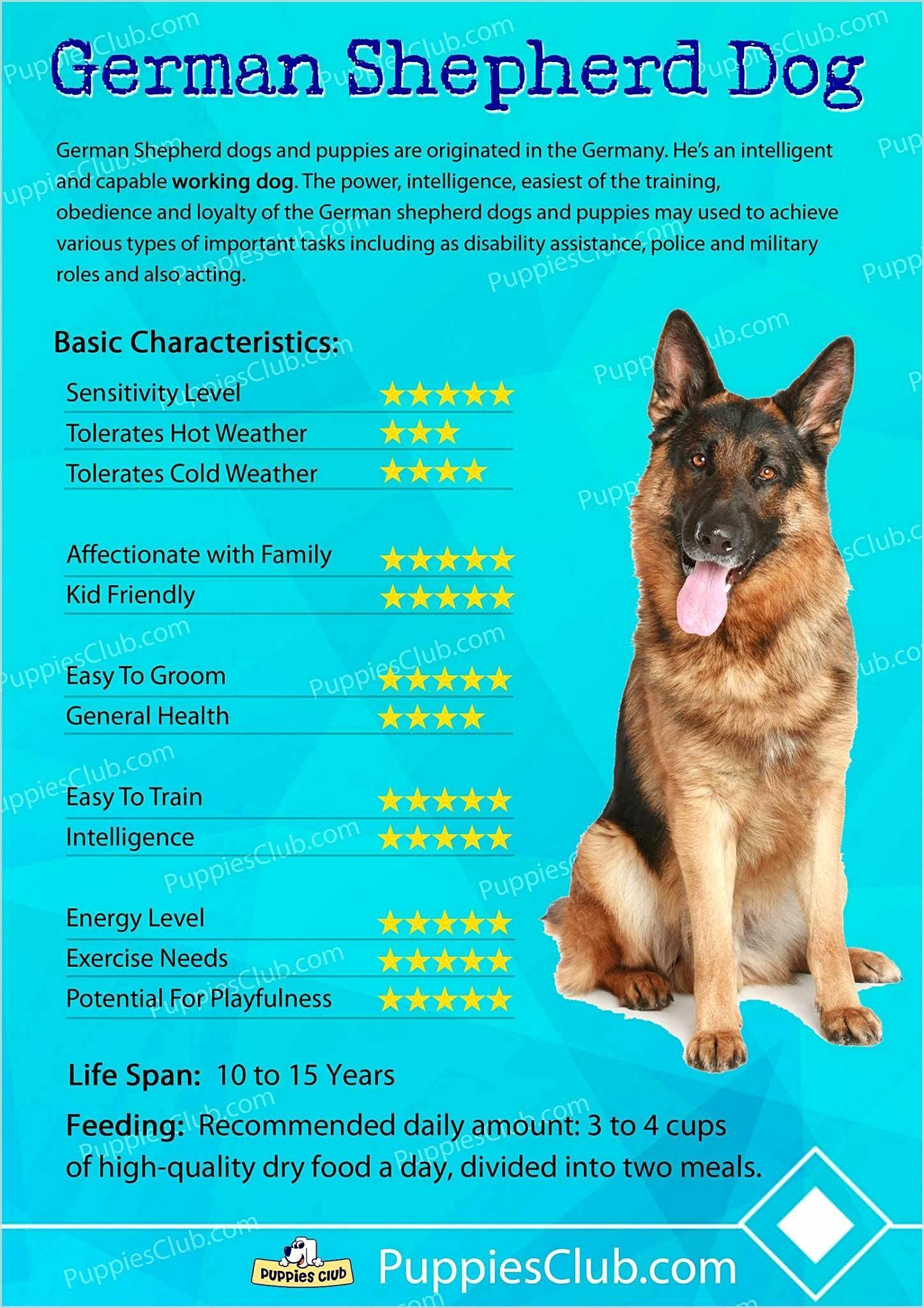 10 Pro Tips For Dog Training By Experts In 2020 German Shepherd