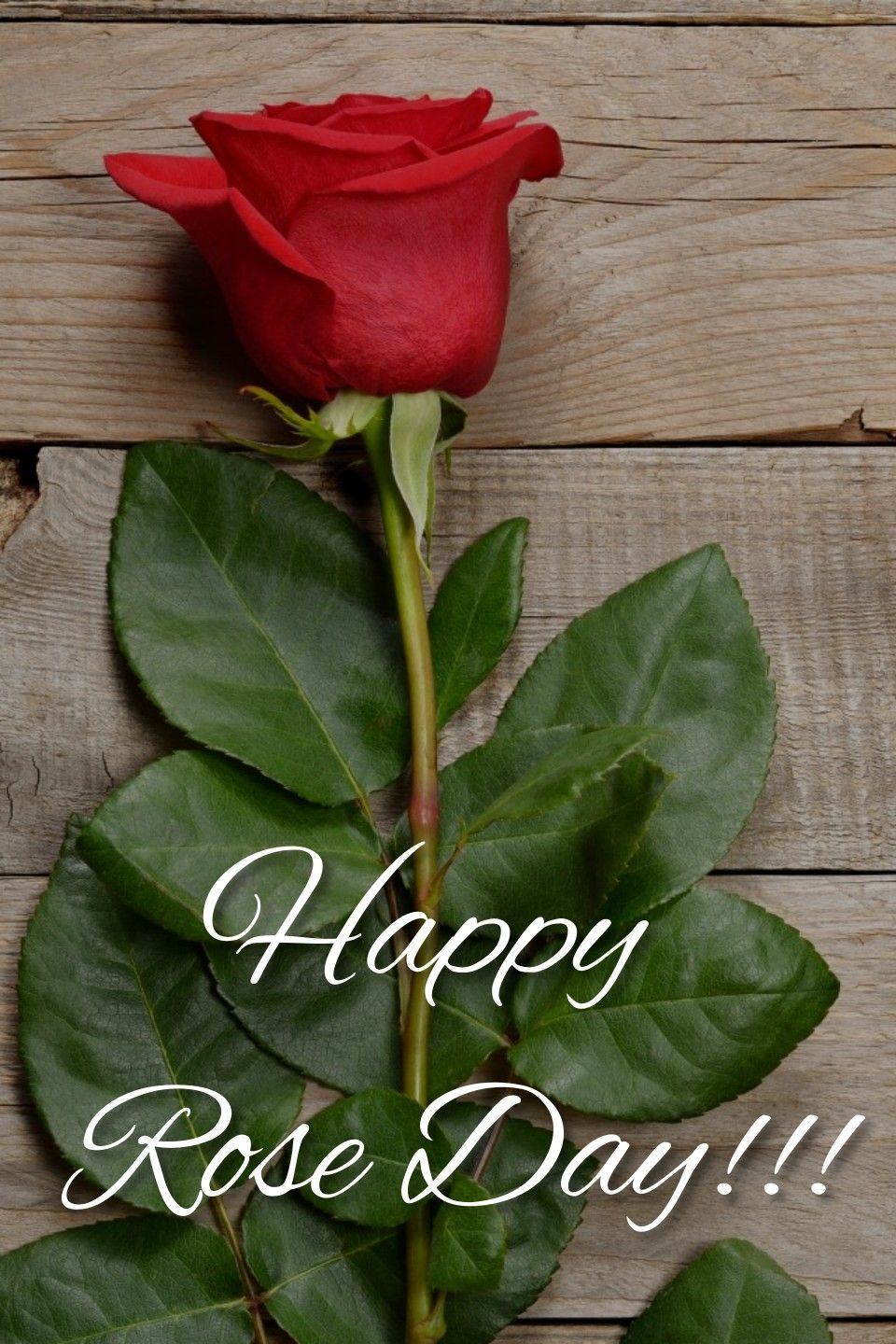 Rose Day Happy Rose Day Wallpaper February Valentines Happy Rose Day