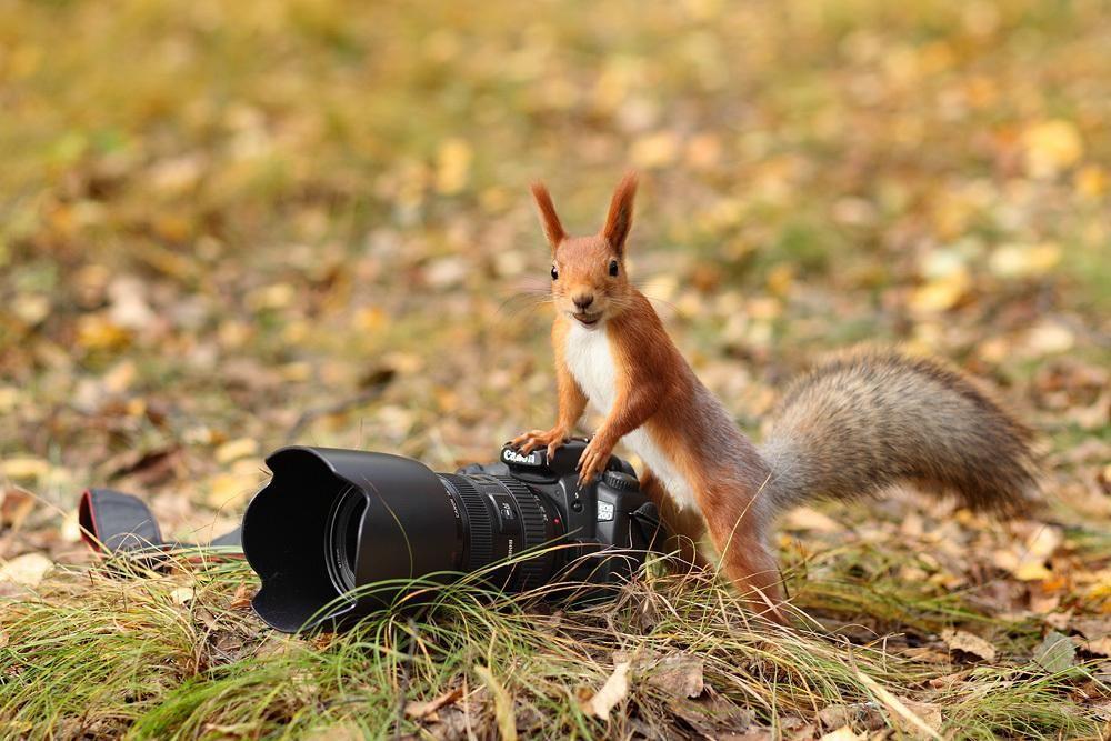 проведении животный мир глазами фотографа старые объекты курортной