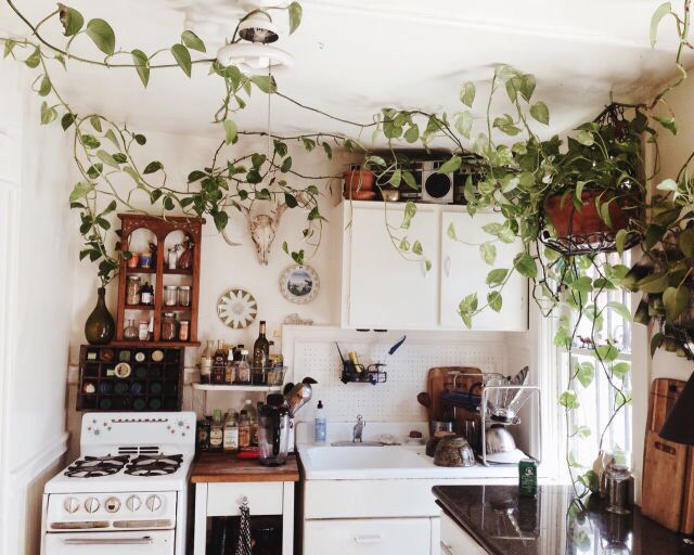 hipster kitchen design. Overgrown  a kitchen with lots of love For the Home Pinterest