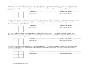 Pea Plant Punnett Square Worksheet Worksheet | Hot Resources 2.4 ...