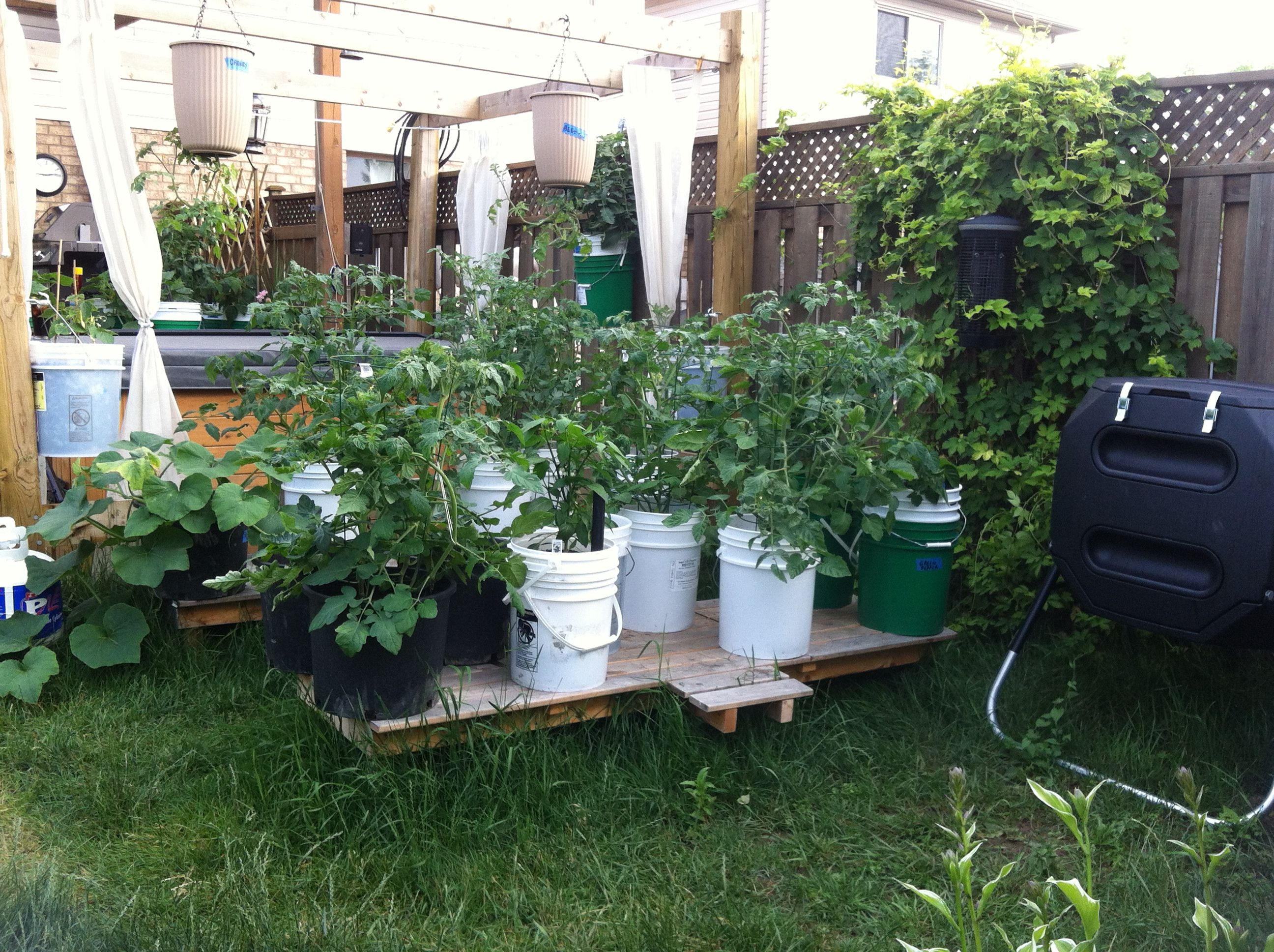 5 gallon bucket garden raised up for easier access for Gardening 5 gallon bucket