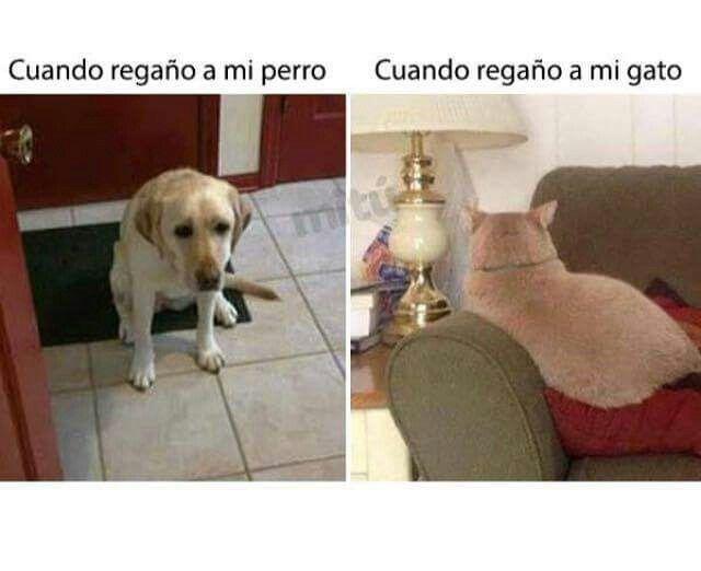 Perros Vs Gatos Humor De Perros Gracioso Memes Divertidos