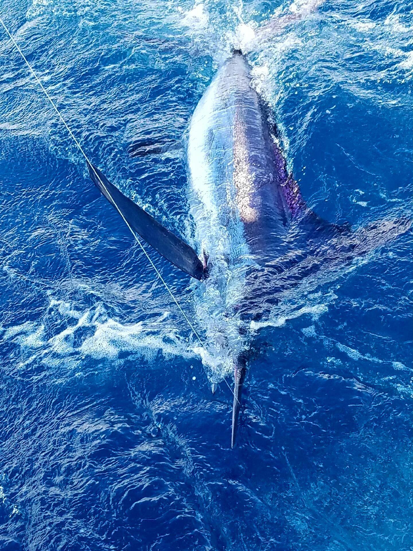 3 Big Game Trolling Saltwater FISHING LURE Tuna Marlin Moldcraft Styl Blue Lot
