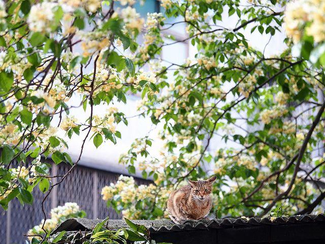 加羅林魚木下的貓 by reptilemonk, via Flickr